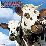 Just Cows 2016 Calendar