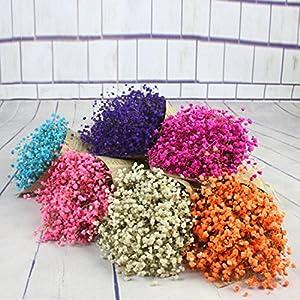 NXDA a Bunch Gypsophila Natural Dried Flower Baby's Breath Bouquet for Home Floor Garden Office Wedding Decor 69