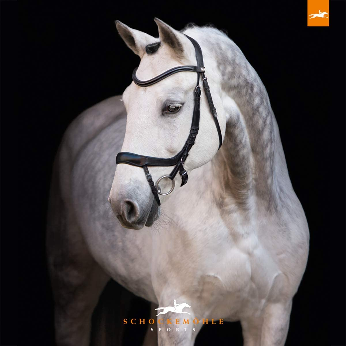 Schockemoehle Sports Equitus Alpha Anatomic Bridle for Dressage and Show Jumping