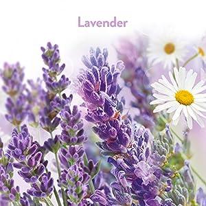 Air Wick Freshmatic 6 Refills Automatic Spray, Lavender & Chamomile, (6X6.17oz), Air Freshener