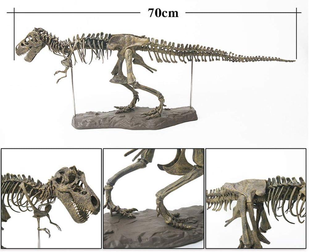 Exquisite Realistic Tyrannosaurus Rex Dinosaur Skeleton Model Collector Decor