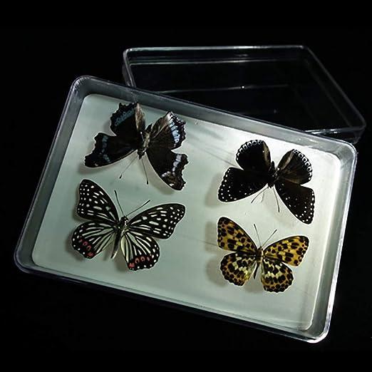 Caja De PláStico Transparente ColeccióN De EspecíMenes De Insectos ...