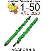NestQ Anillas Agapornis 2020 Color Verde Federativo Policromo