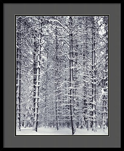 Framed Art Print, 'Pine Forest in the Snow, Yosemite National Park' by Ansel Adams: Outer Size 27 x 33