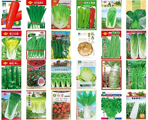 tianjin napa Cabbage 500 Seeds.: China Vegetable Seeds Spring Autumn Garden Yard Balcony Potted Vegetable Seed Sowing Seasons Genuine Balcony Garden Seeds ()