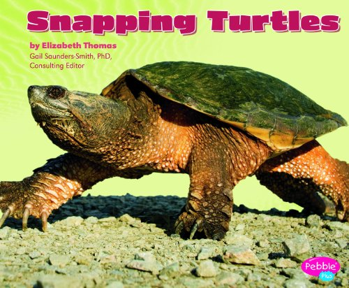 Snapping Turtles (Reptiles)
