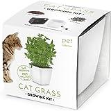 Domestico Kit de Herbes-aux-chats prêt-à-pousser, Cat grass growing kit (Blanc), All-In-One set – pot de fleur auto-irrigant 13x13 cm, graines, substrat frais