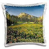 Danita Delimont - Flowers - Wildflowers, Willard Basin near Mantua, Utah, USA - US45 HGA0384 - Howie Garber - 16x16 inch Pillow Case (pc_147285_1)