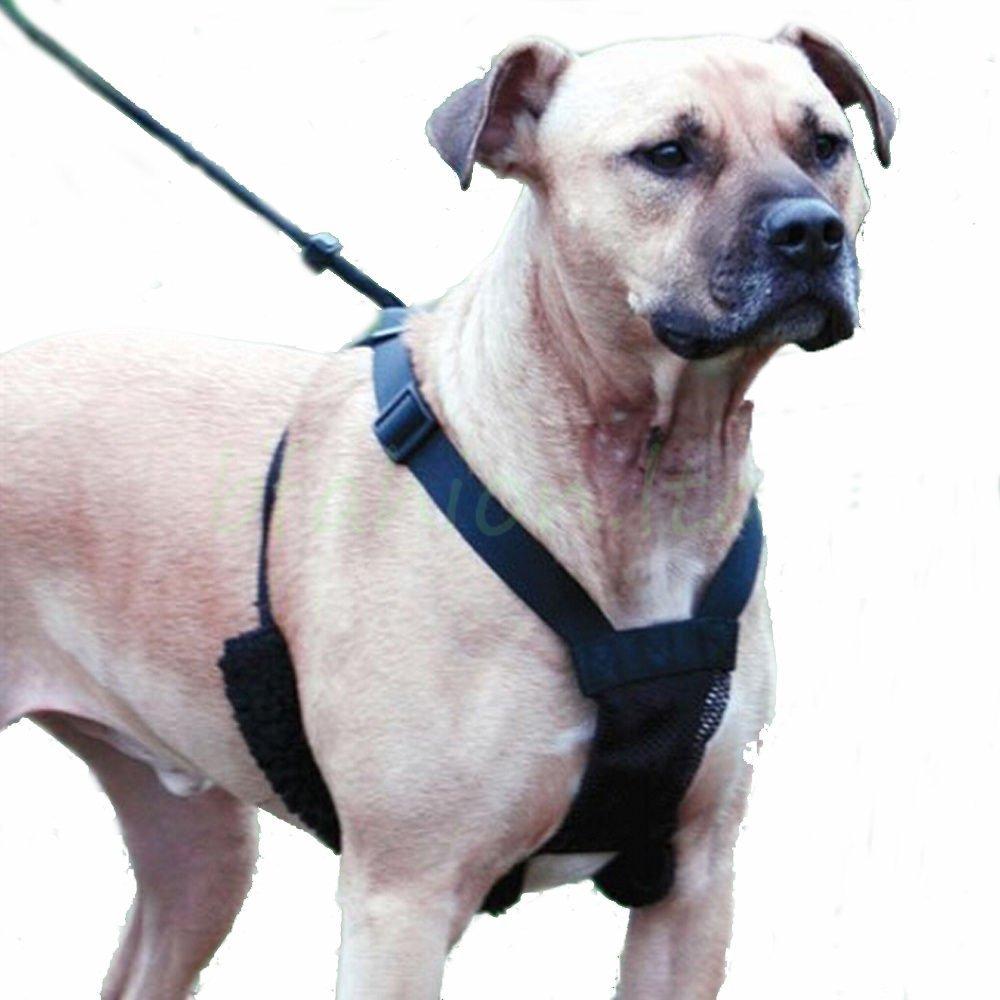 Unho® Arnés Perro Correa Cinturón de Seguridad para Perro Collar ...