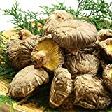 Dried shiitake mushrooms shiitake mushrooms Kyushu natural dried vegetables dried shiitake mushrooms Archaeological 80g