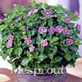 AGROBITS 100 Exacum Affine Fragrance Bonsai Cascading Landscape Planning Easy Grow Floribunda Exacum Affine Bonsai Flower: 4