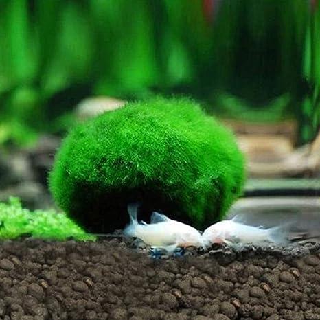 POPETPOP Plantas acuáticas de Bolas de Musgo para acuarios o decoración de acuarios de 3 cm: Amazon.es: Productos para mascotas