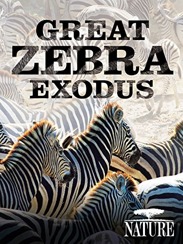 Nature: Great Zebra Exodus