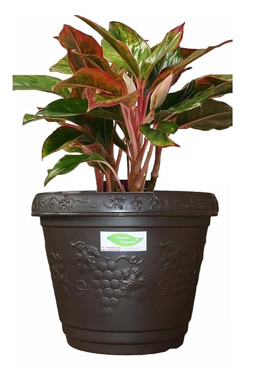 Blossom 12 inch decorative pot Dark grey color (PACK OF 2) - Minerva Naturals