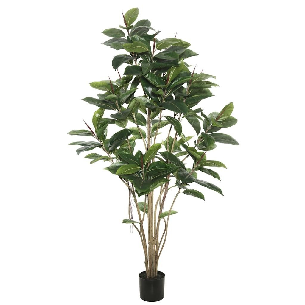 Vickerman TB170760 Everyday Rubber Tree