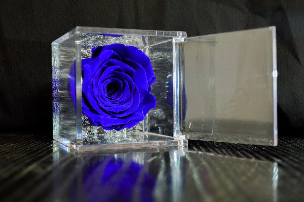 Blu 5 Cubo Rosa Stabilizzata Blu 5x5x5 profumata, Passionefiori.it il Cubo con rosa è una vera e propria Rosa che dura 5 anni - fiore conosciuto anche come Rosa eterna, non ha bisogno di acqua ne luce. Premium-Rose.com