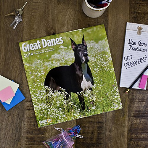 Great Danes 2018 16 Month Wall Calendar 12 x 12 inches Bright Day Calendars Publishing Photo #9