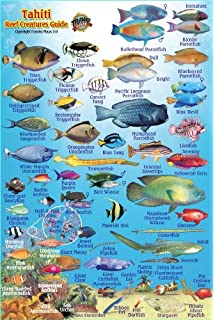 Moorea French Polynesia Map Reef Creatures Guide Franko Maps - French polynesia map