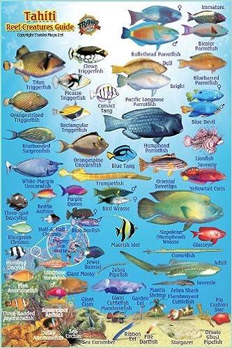 Tahiti Reef Creatures Guide Franko Maps Laminated Fish Card ...