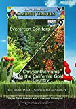 Garden Travels Evergreen Conifers/Chrysanthemums in the California Gold Country