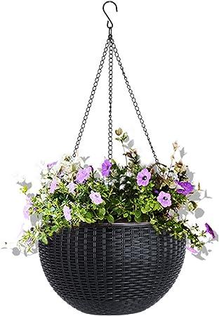 24 HANGING BASKET PLUG PLANTS FOR £18.99 POSTAGE FREE