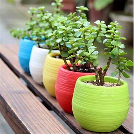 Globents - Macetas de Colores pequeñas, jarrones de jardín, decoración para el salón, decoración de plástico PP, 7 x 7 x 5,5 cm: Amazon.es: Hogar