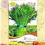 New Thai Water Spinach Kangkong Vegetable 80+ Seeds