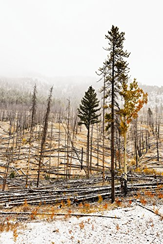 Posterazzi Sawback Burn On Bow Valley Parkway. Fire Intentionally Set In 1993 In Effort To Renew Forest And Wildlife Habitat. Banff National Park Alberta Poster Print (22 x - Valley Parkway Bow