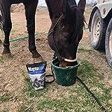 MagnaGard Gastric Support Supplement for Horses