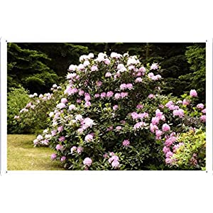 "Flower Tin Sign Azalea Bush Park Beauty 25836 by Waller's Decor (7.8""x11.8"") 4"