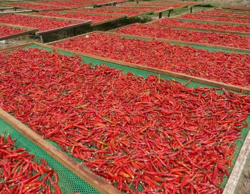 Buy sweet chili sauce organic