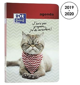 Oxford Funny Pets – Agenda escolar diaria 2017-2018, 1 página por día, 352 páginas, 12 x 18 cm – Diseño Gatito (idioma español no garantizado)