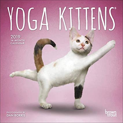 Mini calendario 2019 gato Yoga - gato humouristique - Rigolo ...
