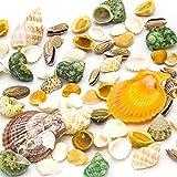 Natural Sea Shells, Assorted Mixed Beach Seashells for Nautical Decor ,9 oz, Bag of Approx. 80 Seashells