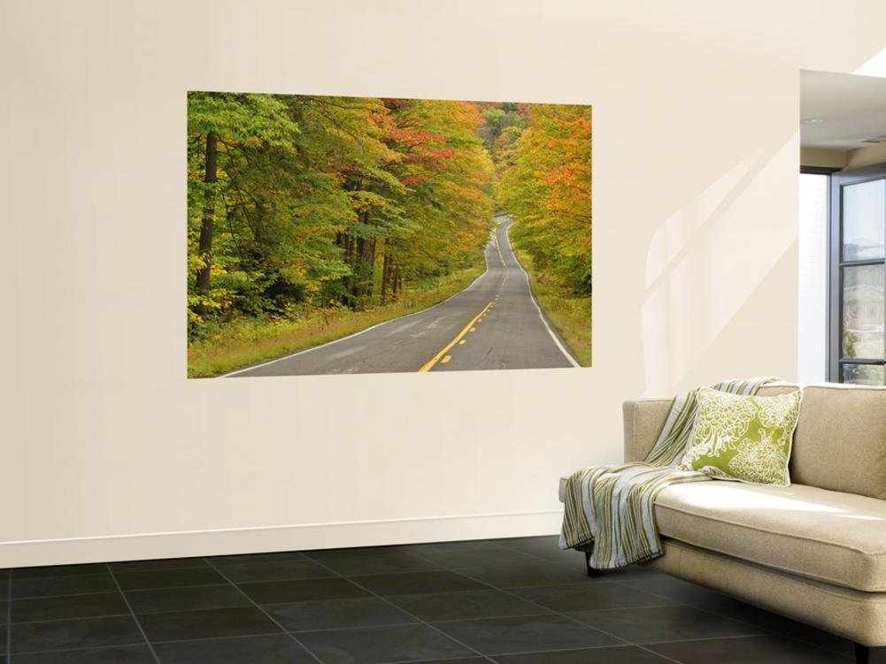 Roadway Through White Mountain National Forest, New Hampshire, USA Wall Mural by Adam Jones 48 x 72in