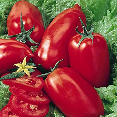 Tomato Garden Seeds - Amish Paste - Non-GMO, Heirloom Vegetable Gardening Seed