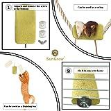 Lava Ledge (1 pc) --- Pet Safe Pumice Chew Toy