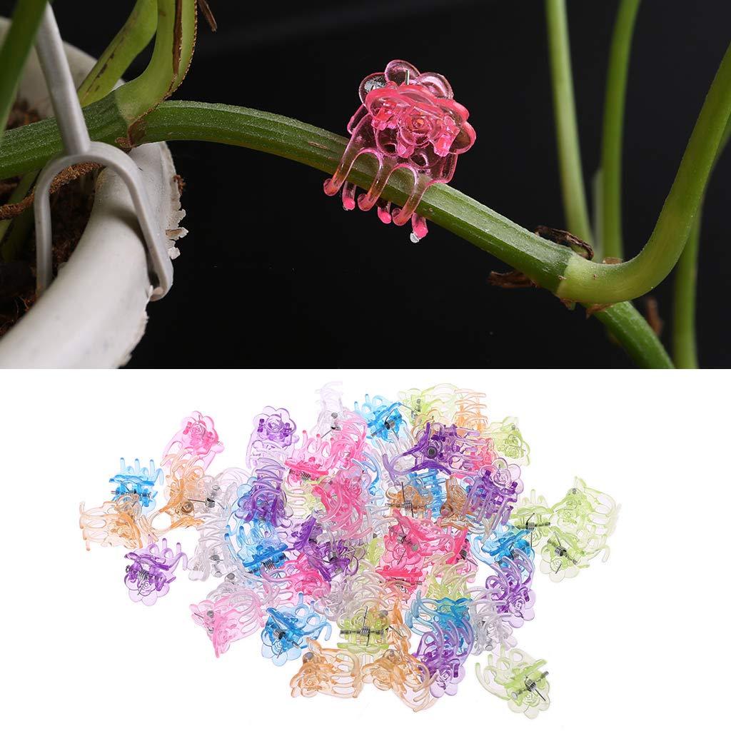 Ycncixwd 60 Piezas de plástico Plantas Fix Clips orquídeas Clips ...