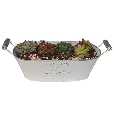 Ashley ZC Concise Style White Metal Planters, Iron Flower Pot - Garden Container Box Succulent Bucket Basket with Handles - Indoor or Outdoor Decor : Garden & Outdoor