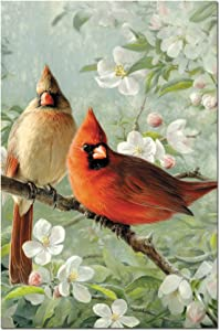 Tree-Free Greetings ECOnotes Notecard Set, 4 x 6 Inches, 12-Count Notecards with Envelopes, Orchard Cardinals (66686)