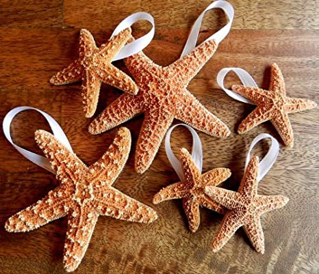 Hinterland Trading Ribboned Brown Sugar Starfish 6 each