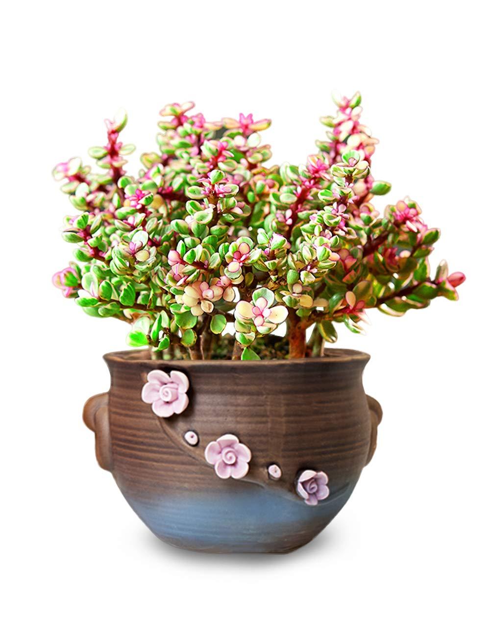 Dahlia 5 Vintage Style Floral Detail Ceramic Succulent Planter Plant Pot Flower Pot