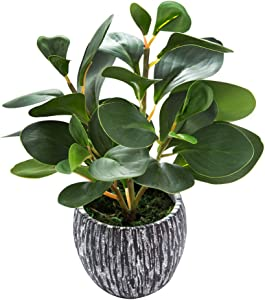 AlphaAcc Mini Potted Artificial Plants Real Looking Plastic Fiddle Leaf Fig Plant with Rustic Black Cement Planter for House Office Desk Decor