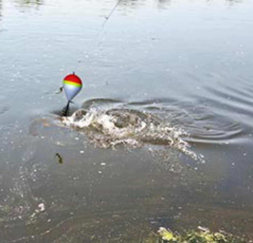3pcs Carpa Pesca Superficie Running Flotante 40g Alimentador Cebo Bolsa Up M/étodo 40g