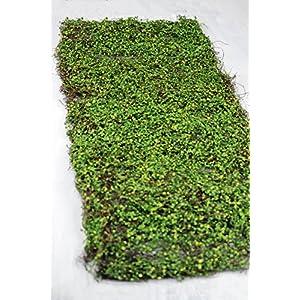 Way Home Fair Moss Leaf Mat Green 16 x36 34