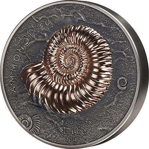ammonite collectibles
