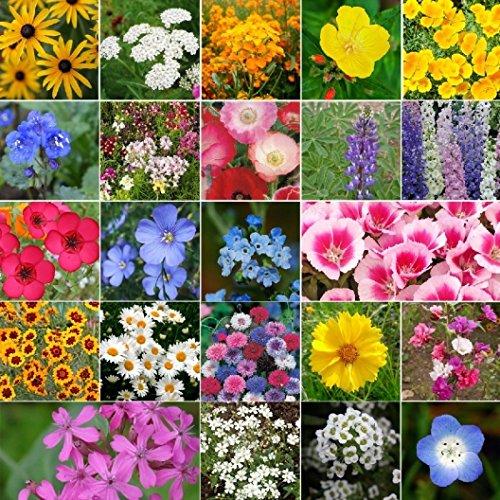 Non GMO Bulk Coastal California Wildflower Seed Mix (1/2 Lb) 422,000 Seeds