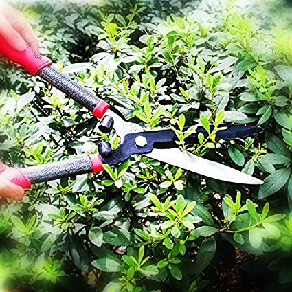 Hedge Clippers /& Shears Comfort Grip Handles,21 Inch Carbon Steel Hedge Clippers Oara Garden Hedge Shears forTrimming Borders Boxwood Bushes