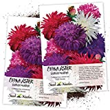 Seed Needs, Ostrich Feather China Aster (Callistephus chinensis) Twin Pack of 1,000 Seeds Each