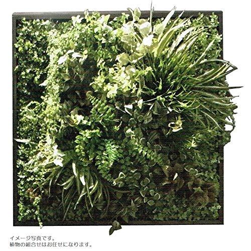 人工観葉植物 アーティフィシャルグリーンアレンジ壁面植裁 □78cm rg-014 B074FXCN41